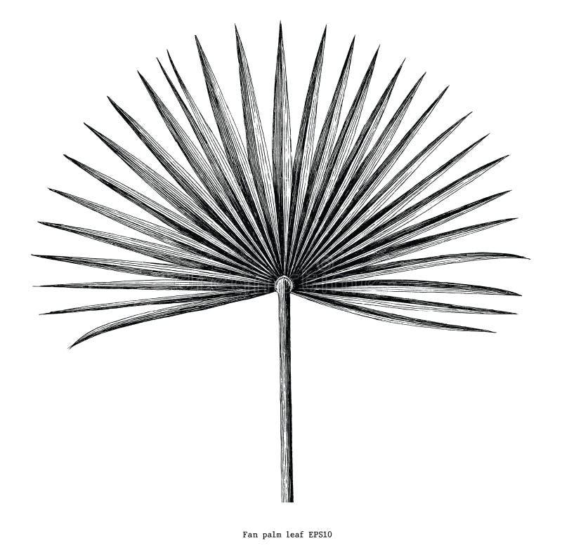 Clipart em folha de palmeira da gravura do vintage da tração da mão do fã isolado em w ilustração royalty free