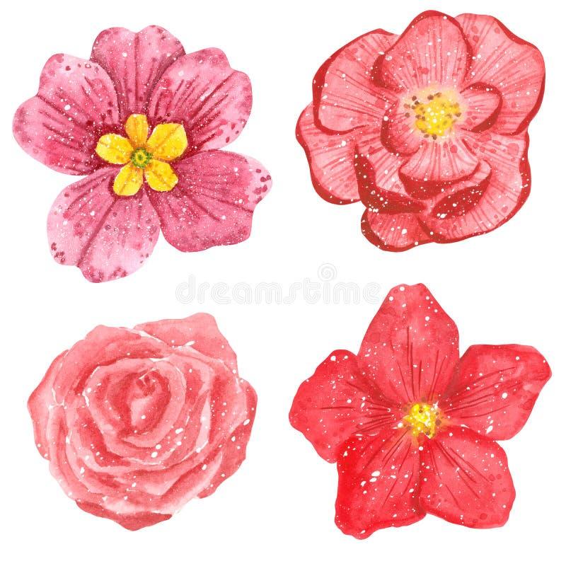 Clipart fijó de flores, de ranúnculo, de Rose, de clemátide y de primavera rosados ilustración del vector
