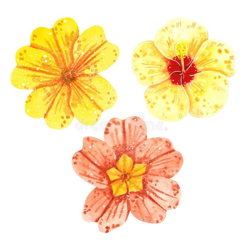 Clipart fijó de las flores, del hibisco y de la primavera amarillos, ejemplo exhausto de la acuarela de la mano libre illustration