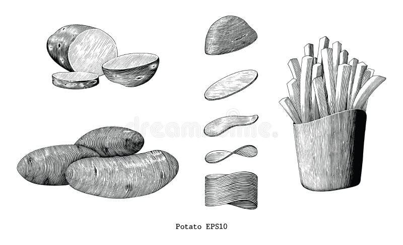 Clipart (images graphiques) de vintage d'aspiration de main de pommes de terre d'isolement sur le fond blanc illustration de vecteur