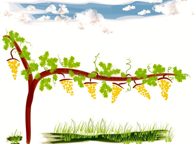 Clipart of a vineyard royalty free illustration