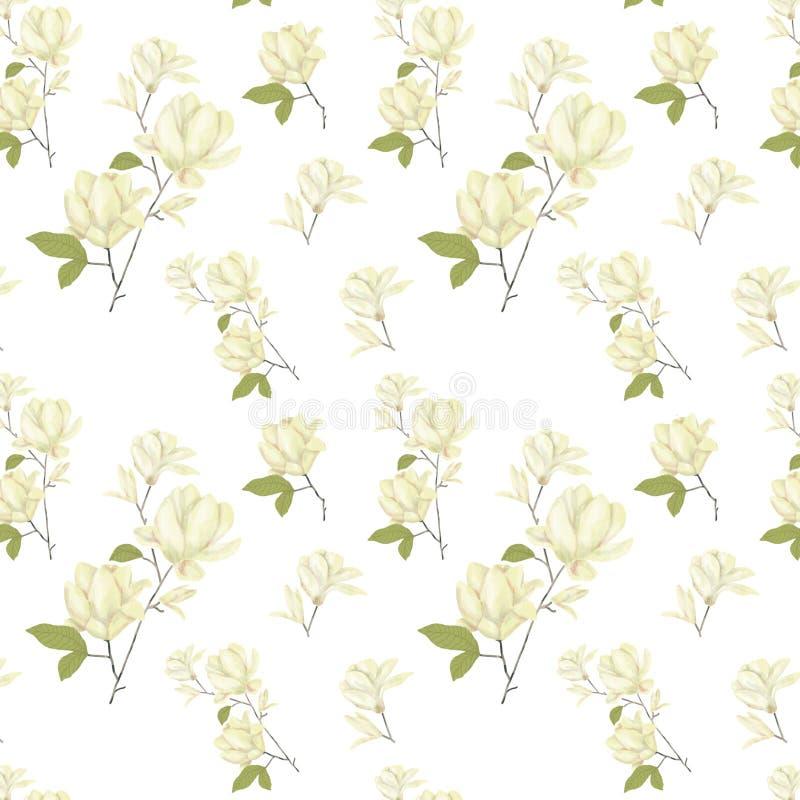 Clipartaquarell des seamlless Musters der Magnolie blüht digitales yellor Blumenillustrations-Blumenillustration auf weißem Hinte vektor abbildung