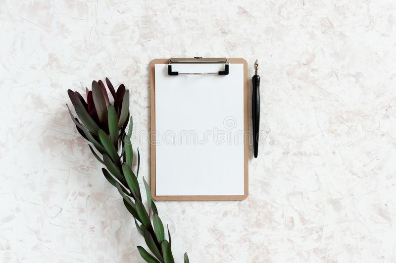 Clipboard, leucadendron flower, calligraphy pen. On a beige textured background royalty free stock image
