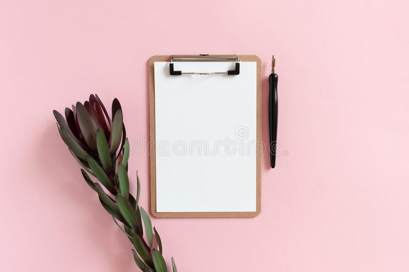 Clipboard, leucadendron flower, calligraphy pen. On a pink background stock image