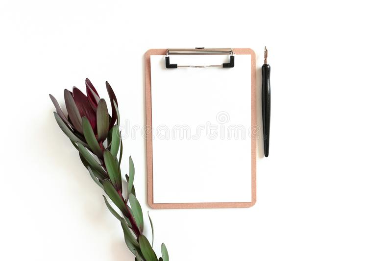 Clipboard, leucadendron flower, calligraphy pen. On a white background royalty free stock photos