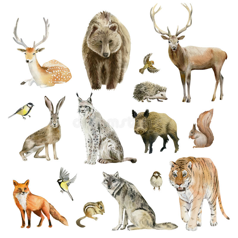 Clipboard set of watercolor hand drawn animal cliparts stock illustration