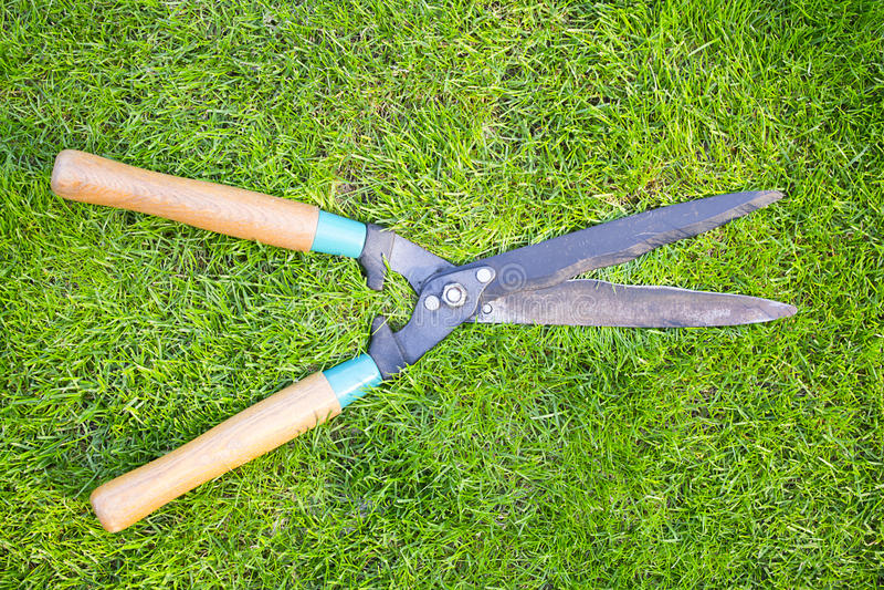 Clippers sur l'herbe verte image stock