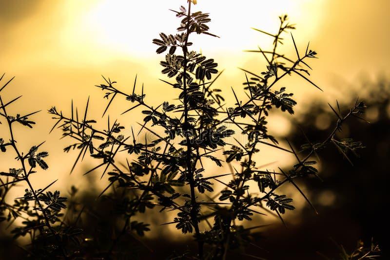Clique da sombra da flor fotos de stock royalty free