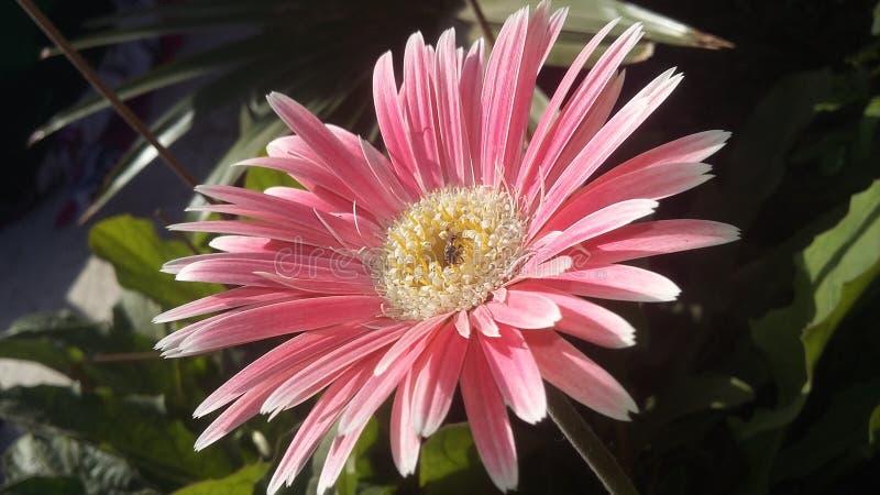 Clique móvel da natureza da flor foto de stock