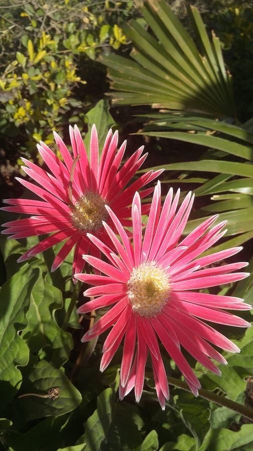 Clique móvel da natureza da flor fotos de stock royalty free