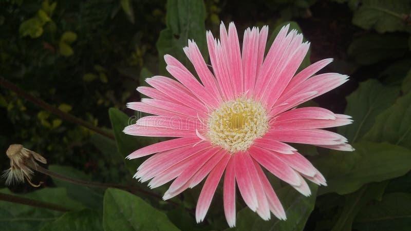 Clique móvel 5 da natureza da flor foto de stock royalty free