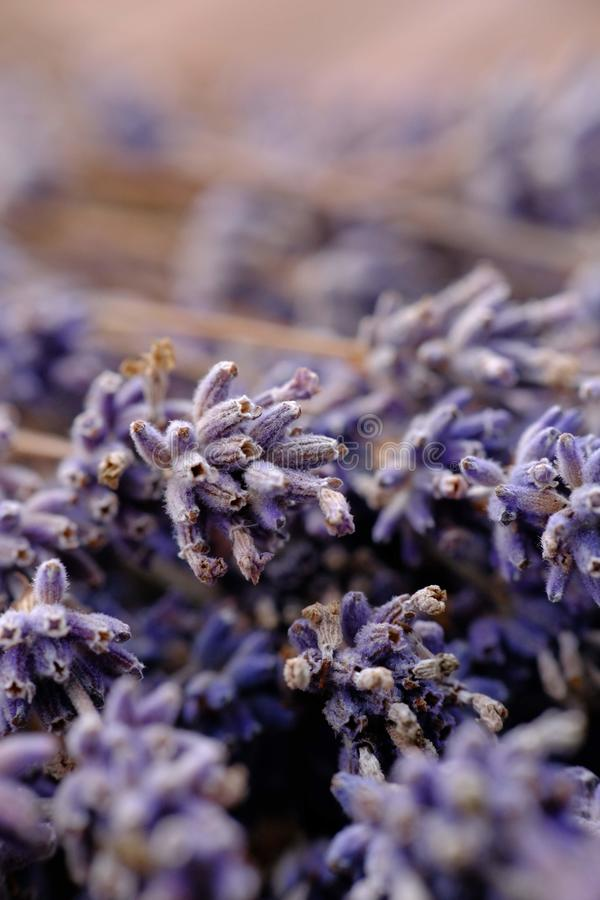 Close up shot of frozen lavender flowers royalty free stock photo