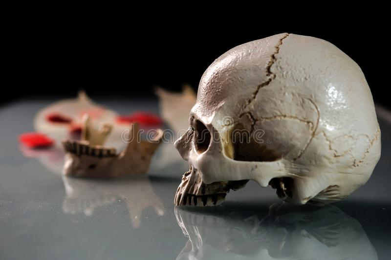 Cloae up of human skull no lower jaw.  stock photos