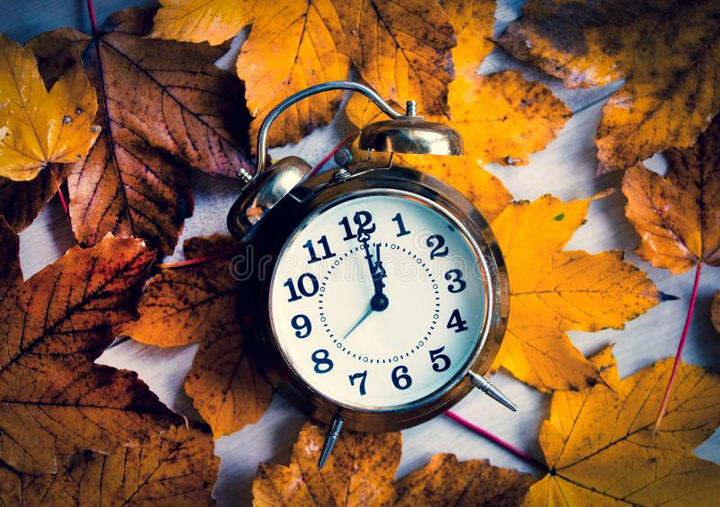 Clock on autumn maple leaves royalty free stock photography