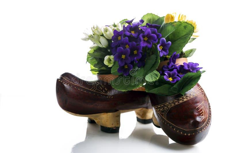 Clog shoe. In white background Original royalty free stock photos