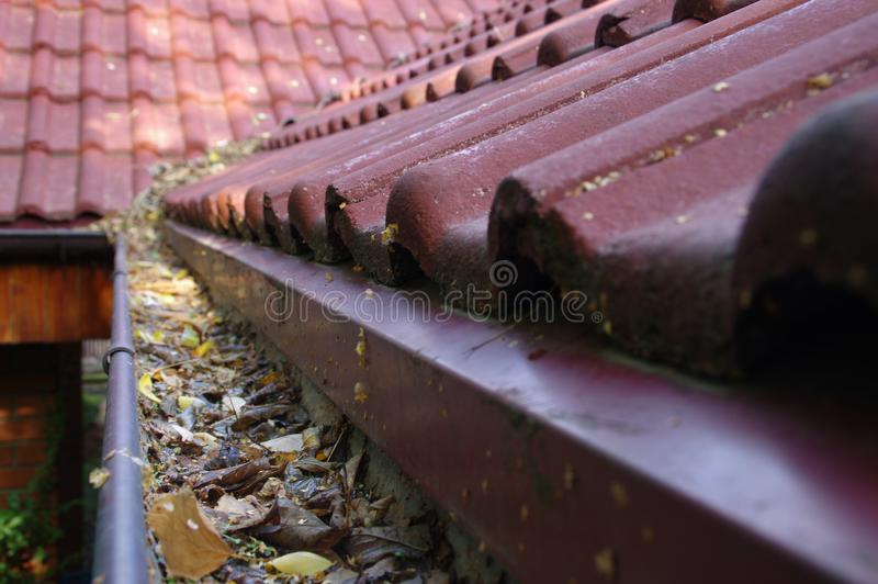 Clogged gutter. Through the leaves. Spring and autumn cleaning of the roof gutter stock photos