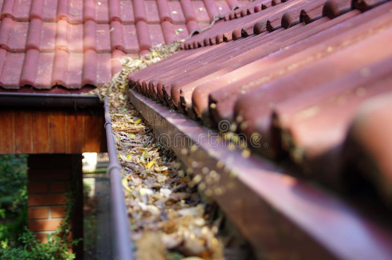 Clogged gutter. Through the leaves. Spring and autumn cleaning of the roof gutter royalty free stock photography