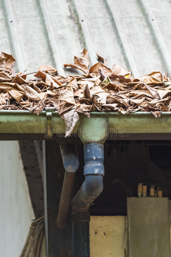 Clogged Gutter. Potential Blocked Gutter by Dead Leaves stock images