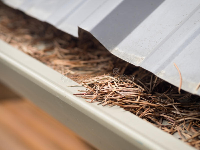 Clogged gutters. Cleaning clogged gutters in Spring royalty free stock photos