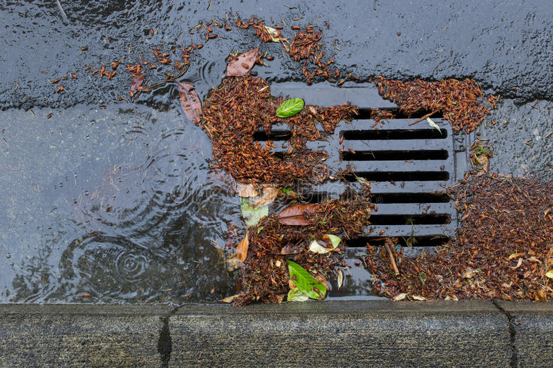 Clogged a street drain during a rain storm. Tree debris clogging a street drain during a rain storm stock photography