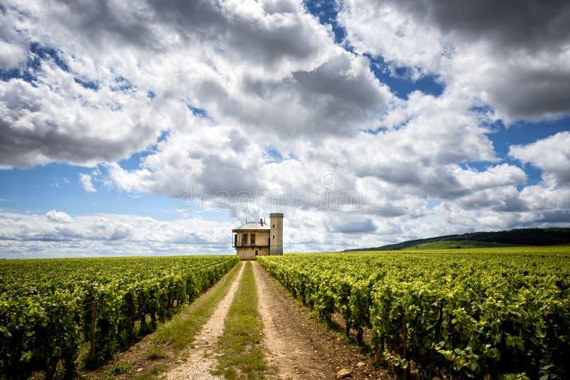 Burgundy, Chateau de La Tour and vineyards, Clos de Vougeot. France. Clos de Vougeot, also known as Clos Vougeot, is a wall-enclosed vineyard, in the Burgundy stock image