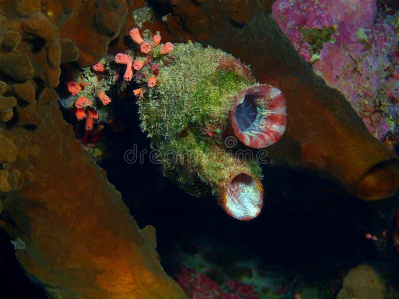 close coral indonesia soft sulawesi up 库存图片