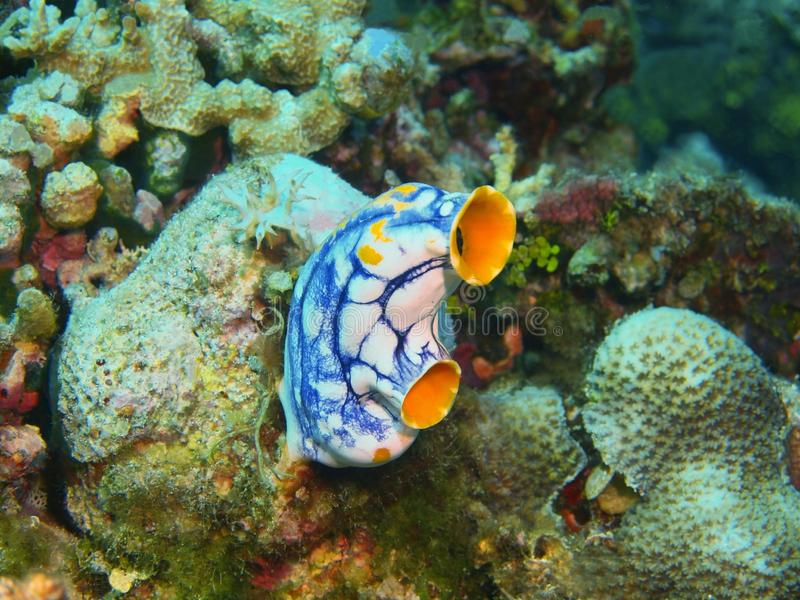 close coral indonesia soft sulawesi up 免版税图库摄影