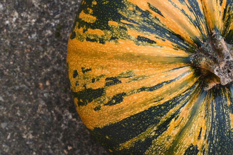 Close crop of yellow and green striped pumpkin. On concrete, seen from above stock images