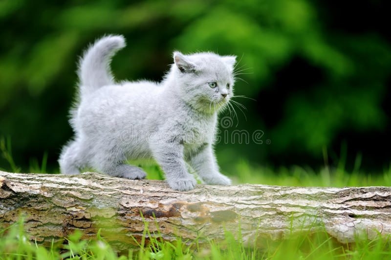 Close gray kitten on tree. Close gray kitten on nature. Cute baby kitten on tree royalty free stock image