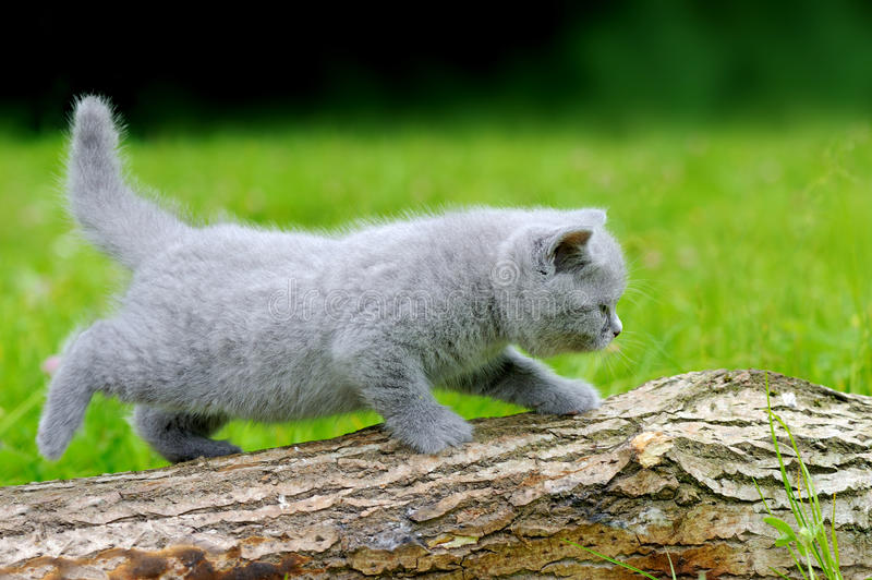 Close gray kitten on tree. Close gray kitten on nature. Cute baby kitten on tree stock photography