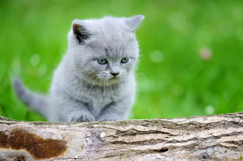 Close gray kitten on tree. Close gray kitten on nature. Cute baby kitten on tree stock photo