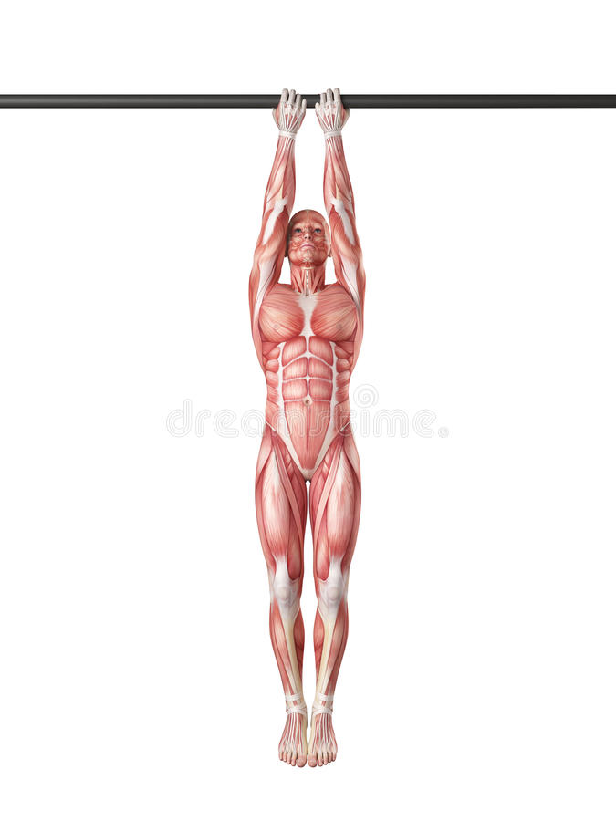 Close grip chin up stock illustration. Illustration of body - 57003043