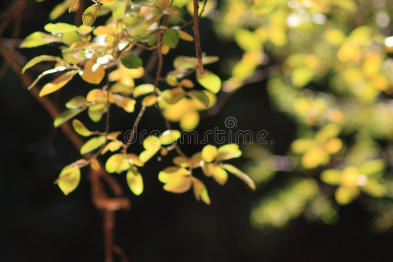Close leaves royalty free stock images