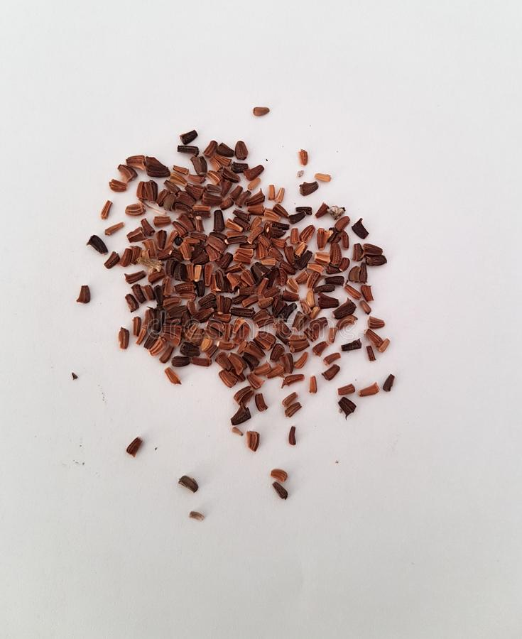 Close look-up of Cherry flower seeds for a bonsai project. Beautiful seeds stock photo