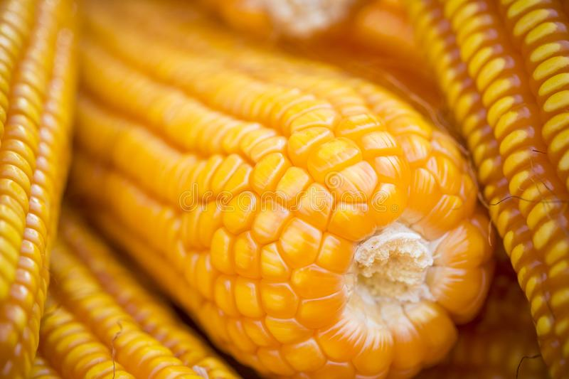 Close macro shoot of Maizebhutta crop, Thakurgaon, Bangladesh. Maize bhutta a CEREAL crop, Zea mays of the family Graminae, order Cyperales. In the Bangladesh stock photos