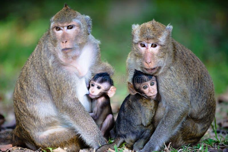 Close Monkey Family stock images