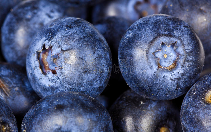 Close op of blueberries - bilberries. Macro closeup of several blueberries or bilberries, also called heath berry and whortle berry (Vaccinium myrtillus stock image