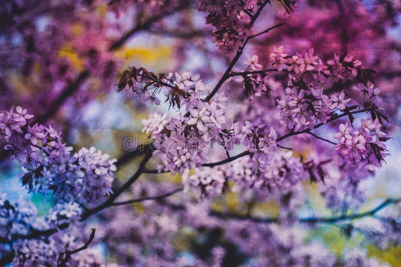 Close Photo of Purple Petaled Flower during Daytime stock photo