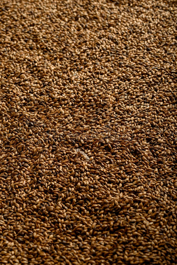 Close photo up of malt grains for darker beers. Close photo up of malt grains, expensive malts for darker beers stock images