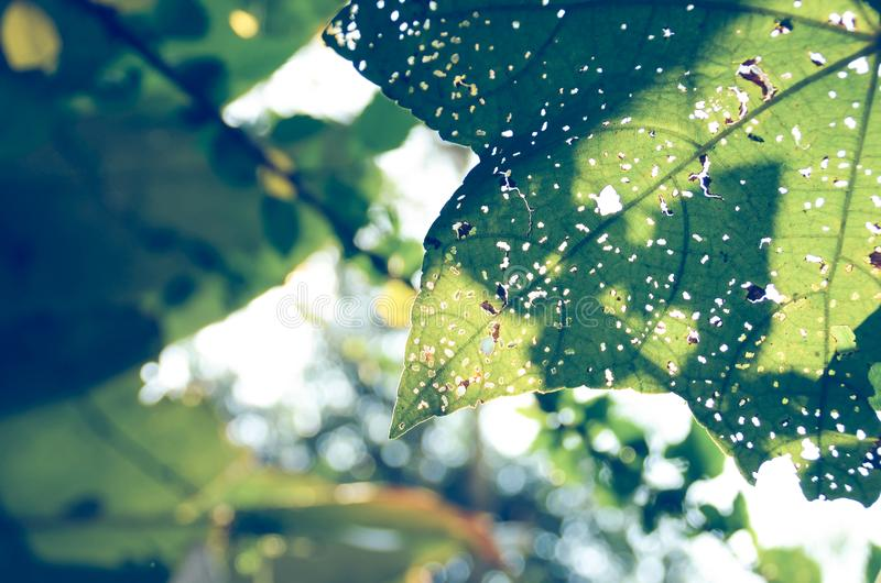 Close Photography of Green Leaf royalty free stock image