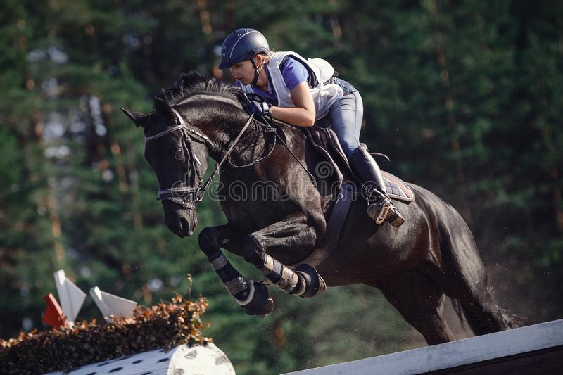 Attractive rider woman jumping over obstacle on black horse during eventing cross country competition in summer stock photo