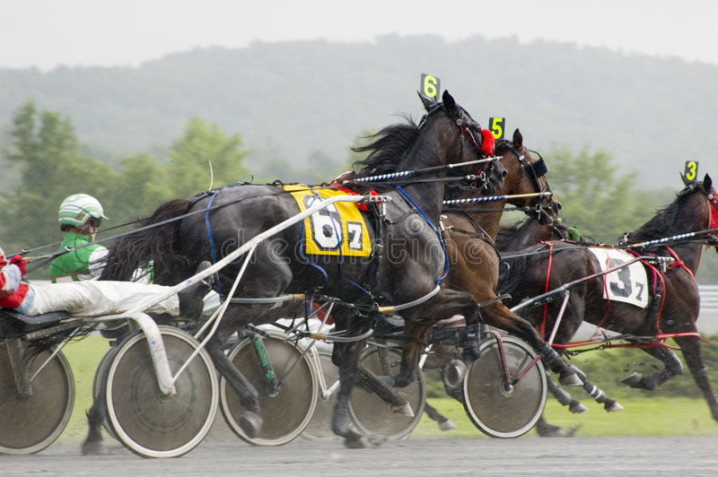 Download Close race stock image. Image of trotter, sport, harness - 1315913