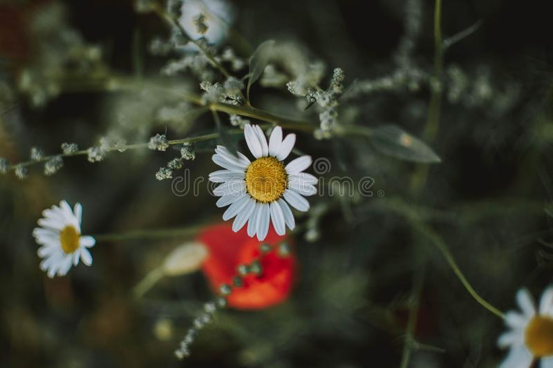 Close range shot of a white flower with blurred background royalty free stock photos