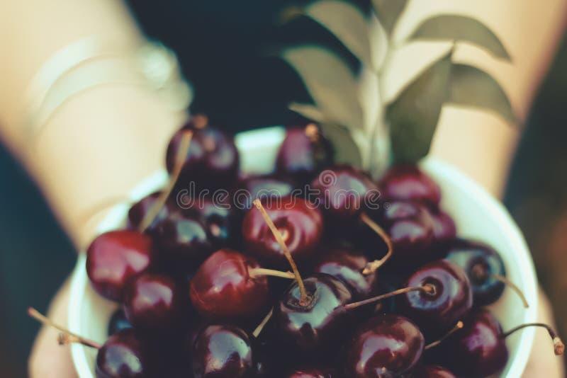Fresh cherries in a bowl stock photo