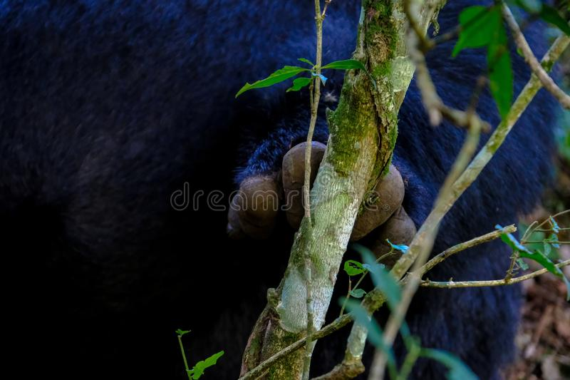 Close shot of a monkey`s hand on a branch with burred natural background stock image
