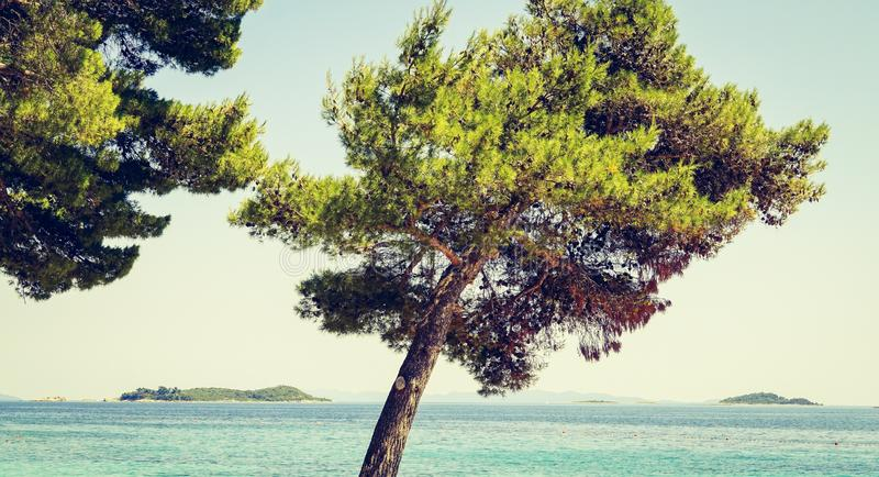 Close shot of a tilted tree near a sea on a sunny day. A close shot of a tilted tree near a sea on a sunny day royalty free stock images