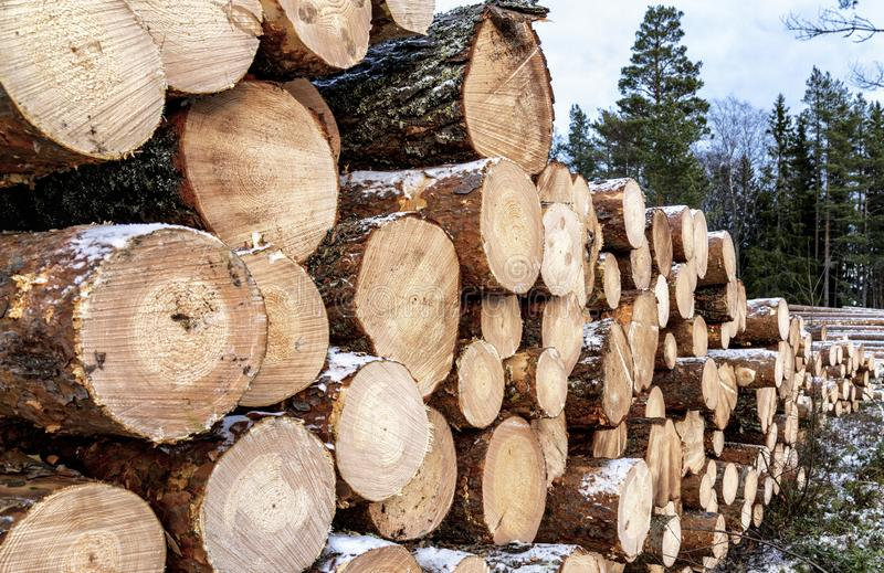 Close side view of pile of pine tree logs after clear cut of forest in Northern Sweden. Cloudy winter day. Lappland, Scandinavia.  stock photography