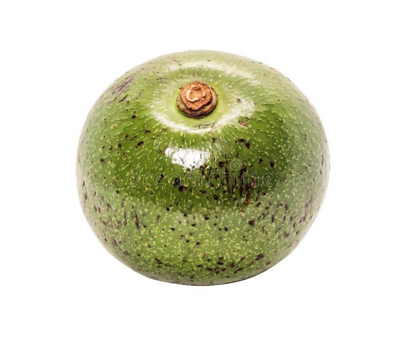 Close-up één van groene Thaise avocado op witte achtergrond stock afbeeldingen