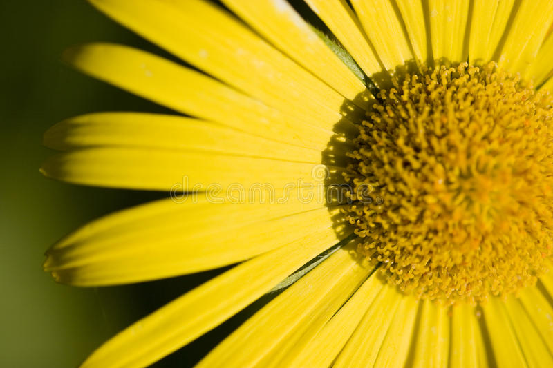 Download Close-Up stock photo. Image of outdoors, beauty, bright - 14766936