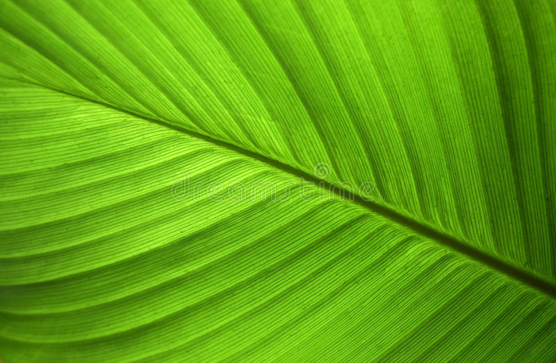 Close-up abstract of green leaf nature background stock photo